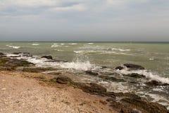 Schmutziges Meerwasser voll der Meerespflanze Lizenzfreies Stockfoto