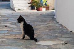 Schmutziges Schwarzweiss-Kätzchen mitten in Straße lizenzfreies stockfoto