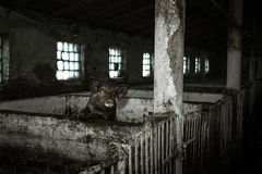 Schmutziges Schwein und ihre Kinder Lizenzfreie Stockbilder