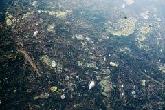 Schmutziges Seeverschmutzungskonzept, viel Abfall im Wasser, Plastikflaschen, Abfall und anderer Kram Lizenzfreie Stockfotografie
