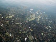 Schmutziges Seeverschmutzungskonzept, viel Abfall im Wasser, Plastikflaschen, Abfall und anderer Kram Stockfotos