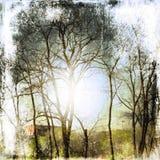 Schmutznaturhintergrund mit bloßen Bäumen Stockbild