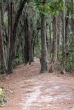 Schmutzpfad in den Wald Lizenzfreies Stockfoto