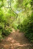 Schmutzpfad im Dschungel Stockbild
