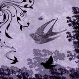 Schmutzsplatter-Liebes-Tauben lizenzfreies stockbild