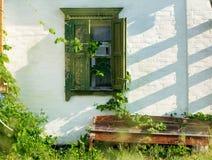 Schmutzwand mit wilden Traubenblättern und -bank Stockfotografie
