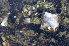 Schmutzwasser, Abfallmoos im Abwasser, faules Abwasser, Brauchwasserverschmutzung, Abfall im Wasserumweltproblem Lizenzfreies Stockfoto