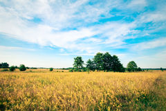 Schön Landschaft Lizenzfreie Stockbilder