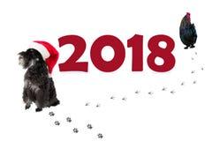 Schnauzer diminuto pequeno de cão preto no chapéu do ` s de Santa como um símbolo Foto de Stock Royalty Free