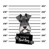 Schnauzer Dog prison. Bad boy. Police mugshot background. Schnauzer criminal. Arrest photo. Vector. Schnauzer Dog prison. Bad boy. Police mugshot background royalty free illustration