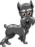 Schnauzer Royalty Free Stock Images