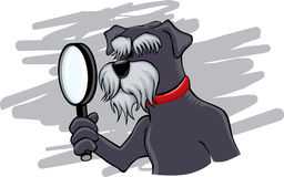 Schnauzer holding magnifying lens Stock Photo