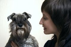 Schnauzer and its owner royalty free stock images