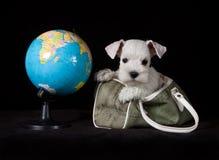 Schnauzer puppy with globe Stock Photos