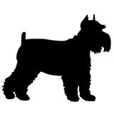 Schnauzer Silhouette Royalty Free Stock Photo