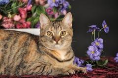 Schöne braune Katze unter den Blumen Stockfotos