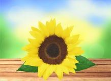 Schöne helle Sonnenblume auf Holztisch über heller Natur Lizenzfreies Stockfoto