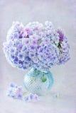 Schöne Hydrangeablumen Stockbild