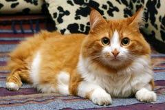 Schöne Katze, die auf einem Bett sitzt Lizenzfreies Stockbild
