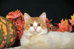 Schöne Katze mit Kürbis und Herbstlaub Stockfotografie