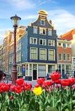 Schöne Landschaft mit Tulpen und Häusern in Amsterdam, Holland Stockfotos