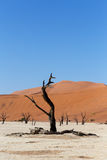 Schöne Landschaft Sossusvlei von Death Valley Stockbild