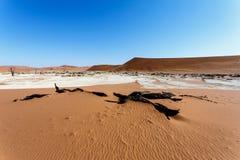Schöne Landschaft Sossusvlei von Death Valley, Namibia Stockfotos