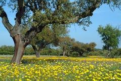 Schöne landwirtschaftliche Frühlingszeit Stockbild