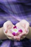 Schöne lila Blume in den Händen der Frau Lizenzfreie Stockfotos