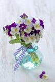 schöne purpurrote Stiefmütterchenblumen Lizenzfreie Stockfotografie
