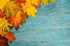 Schöne reale Blätter getrennt auf Weiß Lizenzfreies Stockfoto