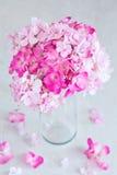 Schöne rosafarbene Hydrangea-Blumen Stockfoto