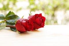 Schöne Rotrosenblume Stockbilder