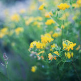Schöne Sommerwiese mit Anlage, Gras und Blumen, natürlicher Hintergrund, Weinlesetonen Lizenzfreies Stockfoto