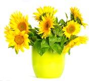 Schöne Sonnenblume in einem Potenziometer Stockfotos