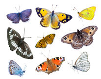 Schöne varicoloured Schmetterlinge Lizenzfreie Stockfotografie