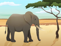 Schöne wilde afrikanische Tierillustration Großer Elefant, der auf dem Gras mit Savannen- und Baumhintergrund steht Lizenzfreie Stockfotos