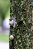 Schnecke auf Baumstamm Lizenzfreie Stockfotos