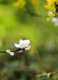 Schnecke auf dem Brunch mit weißer Blume auf grünem Hintergrund stockfotografie