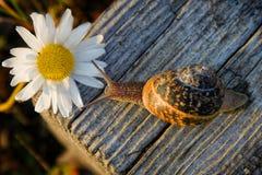 Schnecke auf dem hölzernen Stab und der Blume Stockbilder