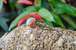 Schnecke auf dem Stein im Garten Stockbild