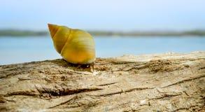 Schnecke auf dem Strand Stockfotografie