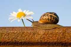 Schnecke auf der Schiene und der Blume Lizenzfreie Stockfotos