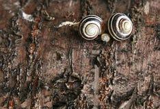 Schnecke auf einem Baum lizenzfreies stockfoto