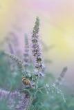 Schnecke auf einem blühenden Stiel Stockfotos