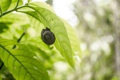 Schnecke auf einem Blatt in einem Regenwald stockfotografie