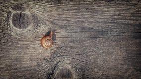 Schnecke auf einem Holztisch lizenzfreie stockbilder
