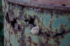 Schnecke auf einem rostigen Fass stockbilder