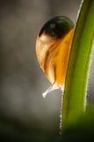Schnecke auf einem Stiel Stockfotografie