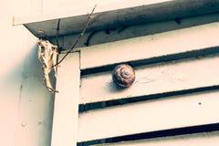 Schnecke auf einer rauen Wand des Gartens Stockfotos